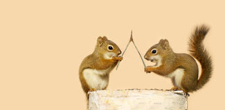 Squirrels making wishes. Funny young squirrels on a log with a wishbone, making wishes stock images