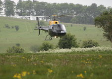 Squirrels and meadows. A squirrel helicopter against a field of buttercups on Salisbury Plain royalty free stock photo