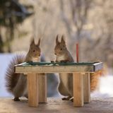 Squirrels with a pool table Royalty Free Stock Image