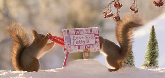 Squirrels posting a christmas santa letter in snow. Red squirrels posting a christmas santa letter in snow Royalty Free Stock Photos