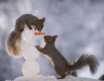 Squirrels with a snowman. Red squirrels with a snowman Royalty Free Stock Photo