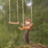 Squirrels on a swing Stock Photography