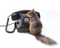 Squirrels talk Stock Photography