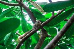 Squirrels on tree Stock Photos