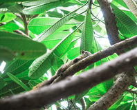 Squirrels on tree Stock Photo