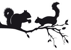 Squirrels on tree, vector. Squirrels on tree branch, vector background Stock Photos