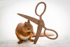 Squirrels trust Stock Images