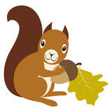 Squirrelwithacorn Royalty Free Stock Image