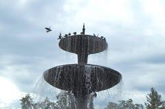 Squirt, брызните фонтан Голуби сидят на фонтане города Стоковое Изображение RF