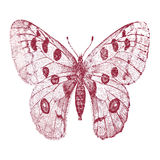 Squirt of a butterfly Royalty Free Stock Photography