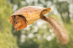 Squirtle vai ar Fotos de Stock