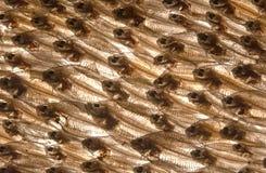 Squisitezza del pesce essiccato Fotografie Stock