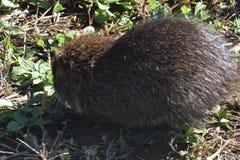 Squit ! photos libres de droits