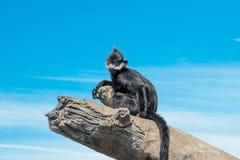 Squrrel-Affe, der auf Klotz sitzt Lizenzfreie Stockbilder