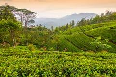 Srà Lanka Photo libre de droits