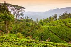 Srà Lanka Image libre de droits