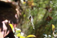 Sr. araña Imagenes de archivo