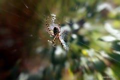 Sr. araña Fotografía de archivo libre de regalías
