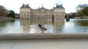 Sr. Pato y su palacio fotos de archivo libres de regalías