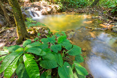 Sra Nang Manora Phangnga Nations-Waldwasserfallpark Stockfoto