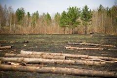 Sradicamento di alberi Fotografie Stock Libere da Diritti