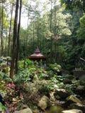 Srambang skog, Ngawi Pälsfodra-trees trä, plötslig nedstigning royaltyfri bild