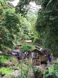 Srambang-Wald, Gebirgsbestimmungsort lizenzfreie stockfotografie