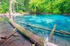 Sramorakod för blått vatten för trädinsida Arkivfoton