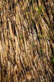 Sraw in het padieveld na eind van oogstseizoen in mornin Royalty-vrije Stock Afbeeldingen