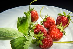 Srawberry fresco Fotografia Stock Libera da Diritti