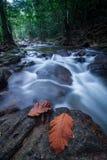 Sream tropical cambiante de la selva tropical Fotos de archivo