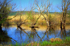 Srebarna Lake,Bulgaria Royalty Free Stock Photography