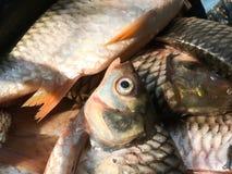 Srebna barbet ryba obrazy stock