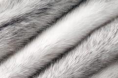 Srebna przecinająca wyderkowa futerkowa tekstura makro- Zdjęcie Stock