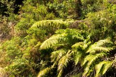Srebne paprocie, Jeziorny Rotoiti, NZ Fotografia Stock