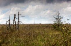 Srebnej brzozy bagażnika Wysocy Fens kształtują teren Botrange Belgia fotografia royalty free