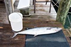 Srebnej ryba pobliski wiadro, łowi pail na mokrej drewnianej podłoga fotografia royalty free