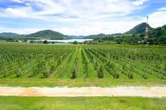 Srebny jeziorny Pattaya Tajlandia Zdjęcie Royalty Free