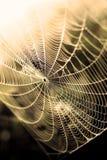 Srebny pająk Zdjęcia Royalty Free