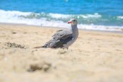 Srebny ptak Obrazy Royalty Free