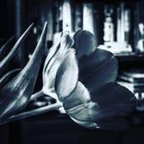 Srebny tulipan zdjęcia royalty free