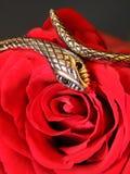 Srebny wąż i wzrastał Fotografia Stock