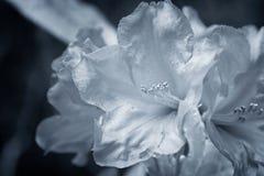 Srebro kwiaty Obraz Stock
