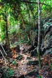 Sri星期六查家Na赖国家公园风景的森林, Sukhothai,泰国 免版税库存图片