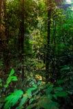 Sri星期六查家Na赖国家公园风景的森林, Sukhothai,泰国 免版税库存照片