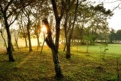 Sri洛坤Khuean可汗公园和植物园 免版税库存照片