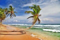 Sri lanka海滩 免版税图库摄影