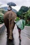 Sri Lanka fotos de archivo