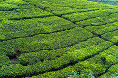 Sri Lanka Arkivfoton