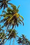 Sri Lanka Arkivfoto
